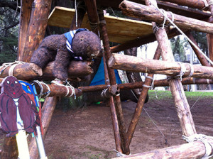 grande castoro bruno