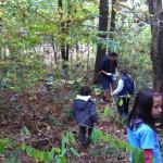 a castagne nel bosco