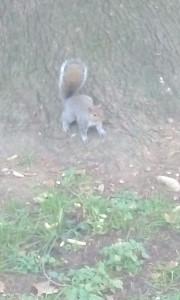 tica tac, insieme, scoiattoli